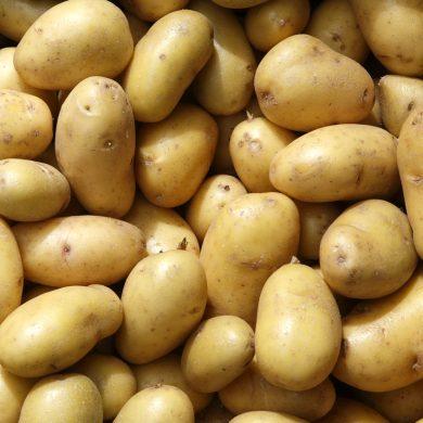 Regionales Gemüse: Kartoffeln